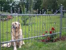 Tierschutzzaun