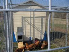 Tiereinzäunung für Hühner